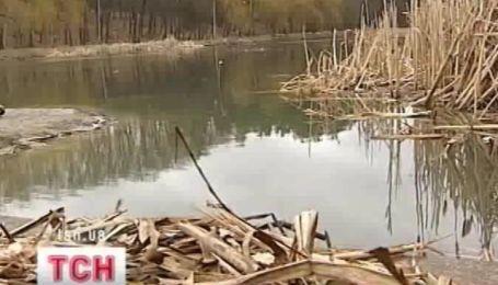 В озерах Голосеевского парка Киева погибла вся рыба