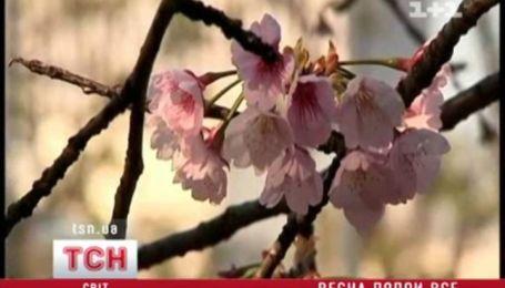 Весна несмотря ни на что