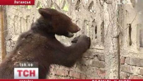 В Луганську ведмідь травмував жінку