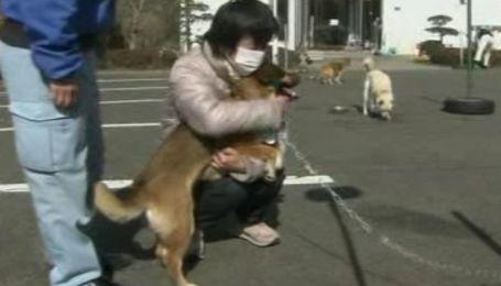 Спасенный пес из Японии вернулся к хозяину