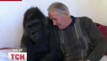 Французька пара удочерила горилу