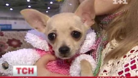 Выставка дорогих и редких собак в Киеве