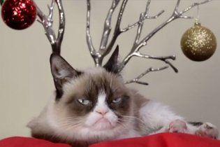 Самые известные котики интернета снялись в новогоднем видео