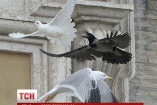 Ученые и священники объяснили инцидент с птицами в Ватикане