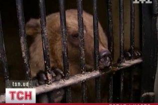 В Киевском зоопарке у бурых медведей Потапа и Насти родилось потомство