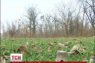 Аномально тепла зима може вбити врожай, але дає українцям зекономити на опаленні