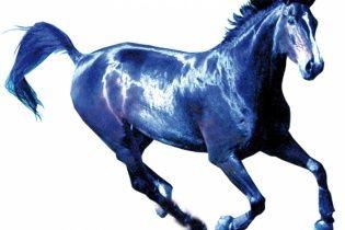 Год Лошади-2014: что знаменует и что принесет каждому из нас