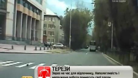 Мережу підкорив голуб, який переходить дорогу на пішохідному переході