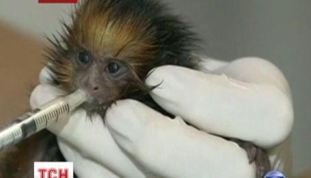 В бразильском зоопарке обезьянку спасают человеческим молоком