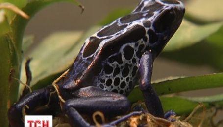 Уникальную выставку лягушек представили сегодня в столичном зоопарке