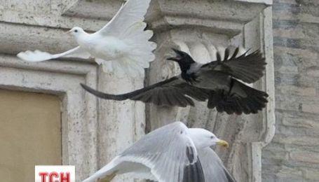 Украинцев смутила плохая примета с голубями мира
