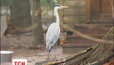 Сочельник для птиц устроили в столичном зоопарке