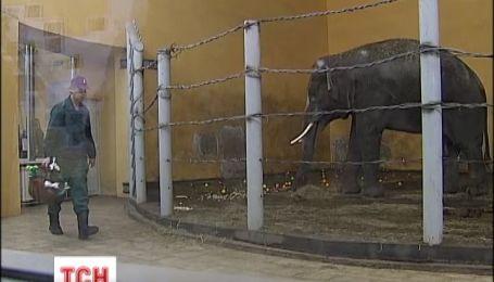В столичном зоопарке праздновали 9 день рождения слона Хороса