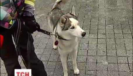 У Києві відбулася виставка собак північних порід