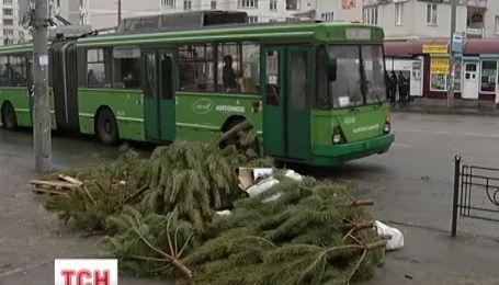 Міста України потерпають від стихійних звалищ ялинок