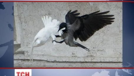 Мир потрясла судьба голубей мира