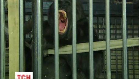 У Київському зоопарку тваринам покращили умови проживання