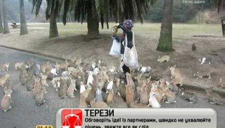 На японском острове люди кормят не птиц, а кроликов