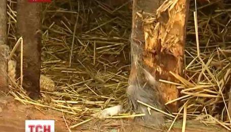 Работник Галицкого национального природного парка раскрыл тайну чупакабры