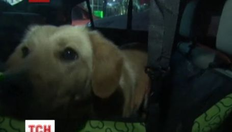 У Сочі захисники тварин вивозять безпритульних собак із міста