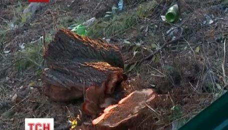 В Криму заради будівництва порубали вікові сосни