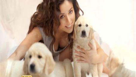 Собаки спасают людей от стресса, но могут заразить опасными болезнями