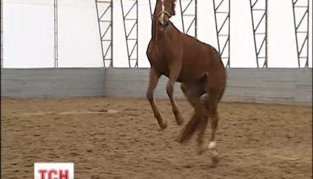 Українська кінна школа приготувала сюрприз для коней