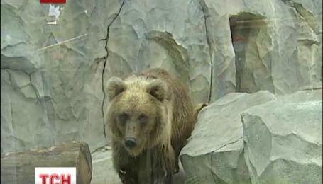 В Киевском зоопарке родилось двое медвежат