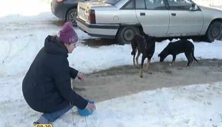 Через морози в Україні страждають безпритульні тварини