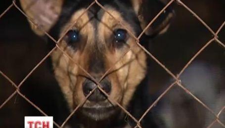 На Киевщине в приюте для собак животные умирают от голода и холода