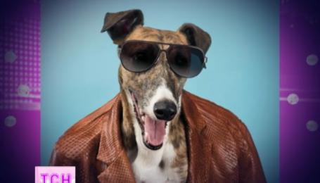 Модний дім Trussardi обличчям нової колекції обрав собаку