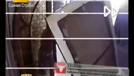 Нові відеозаписи з камер спостереження у Межегір'ї стали інтернет-хітами
