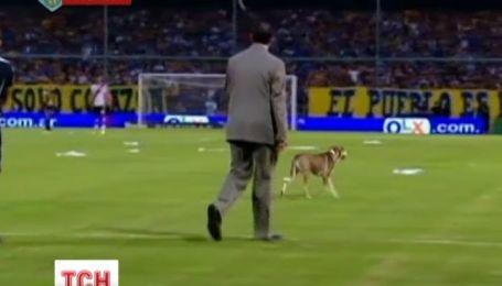 Настоящий курьез произошел на футбольном матче в Аргентине
