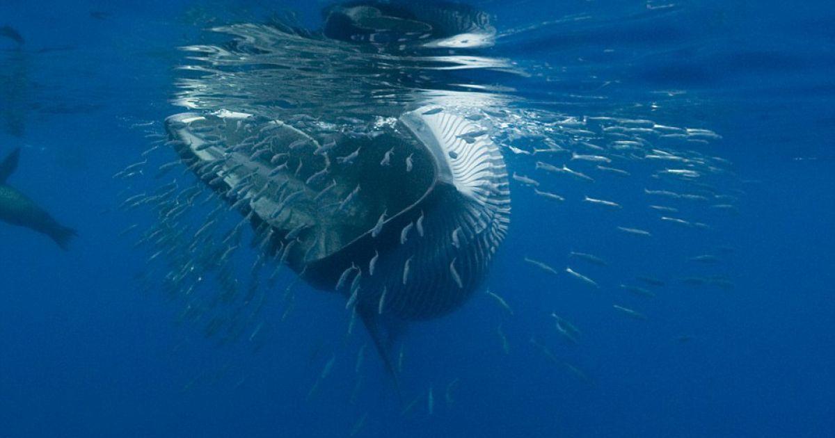 картинки как киты едят найдете самые красивые