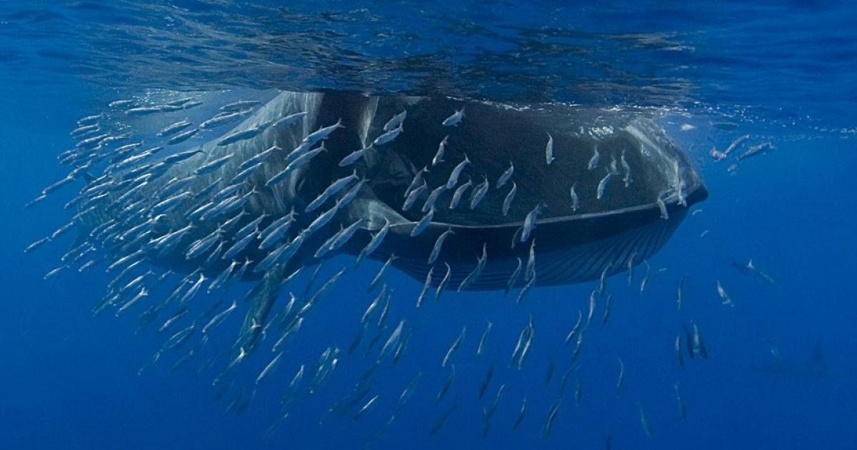 днях молодой фото крили которой питается кит этом разделе