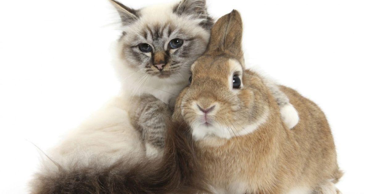 Котя и зая картинки