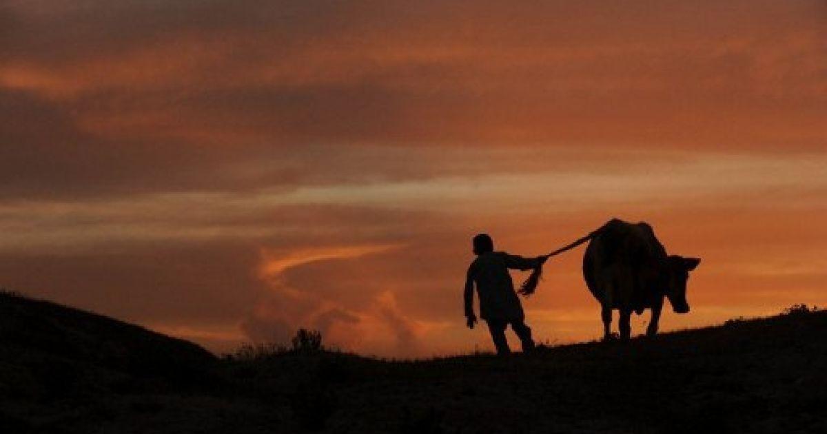 Афганістан, Мазарі-Шаріф. Хлопчик веде свою корову додому у Мазарі-Шаріфі, провінція Балх. @ AFP