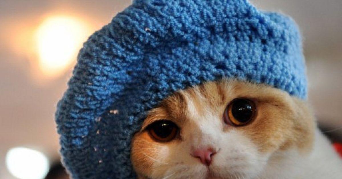 была шапки с кошками картинки для