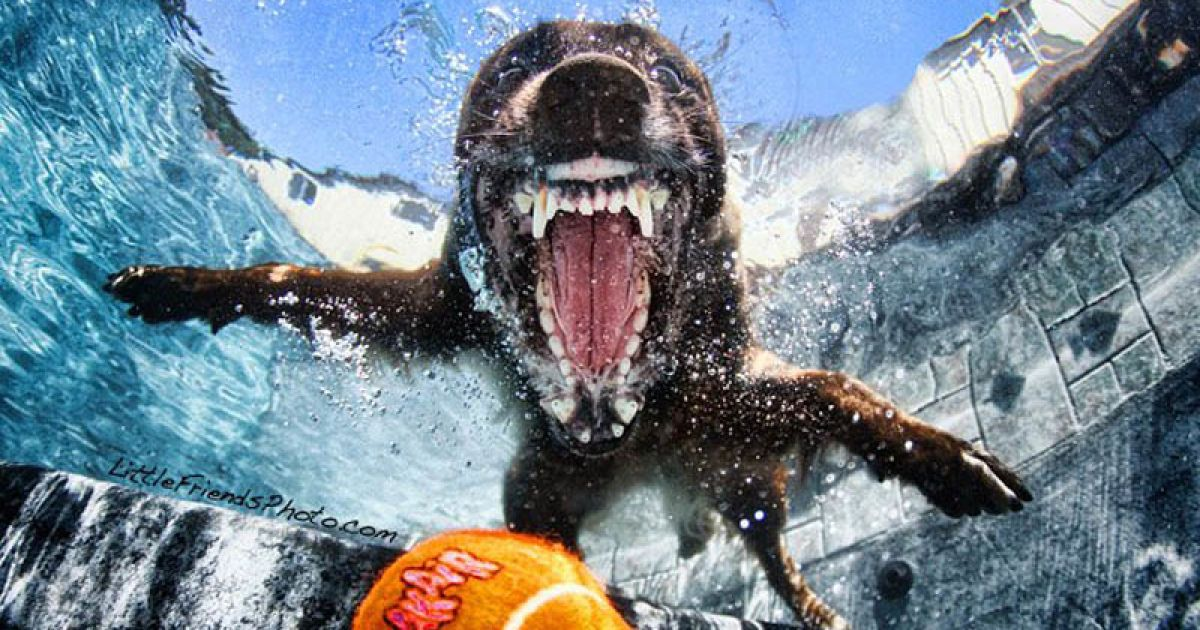 Собаки, которые ныряют @ LittleFriendsPhoto.com