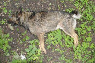Догхантеры отомстили за своего живодера массовым убийством собак
