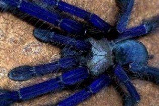 В Каменце-Подольском необычные пауки покусали полуторагодовалую девочку