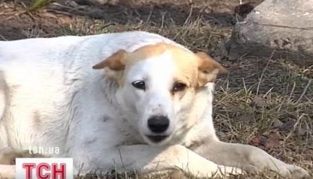 На Ровенщине больная бешенством собака покусала 4-х детей