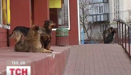 Собака стала настоящим горем для черниговчан