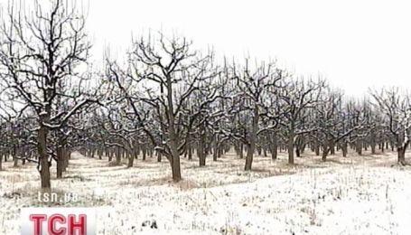 Зима погубила урожай