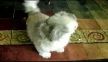 Собака на прізвисько Коді, яка кричить як людина підкорила Інтернет