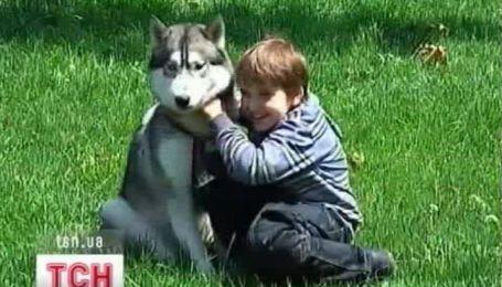 Открывать пасть ночью отныне запрещено собакам в Днепропетровске
