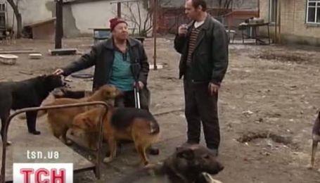 Зграї з 100 безпритульних тварин з'являться на вулицях Києва