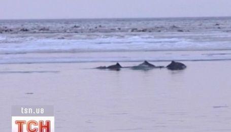 В Крыму чуть не погибли 70 редких дельфинов
