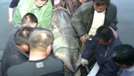 617-килограммовую рыбу выловили китайские рыбаки