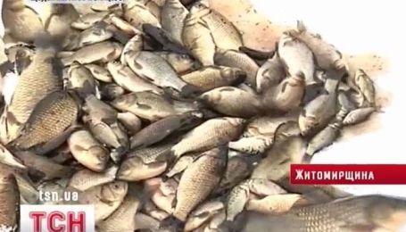 Берега реки Уж в Житомирской области покрылись мертвой рыбой